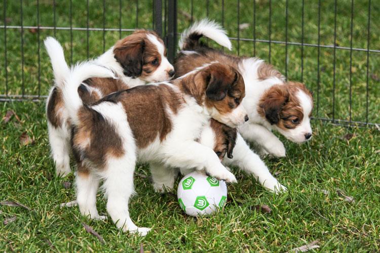 Fussball ist unser Leben ...