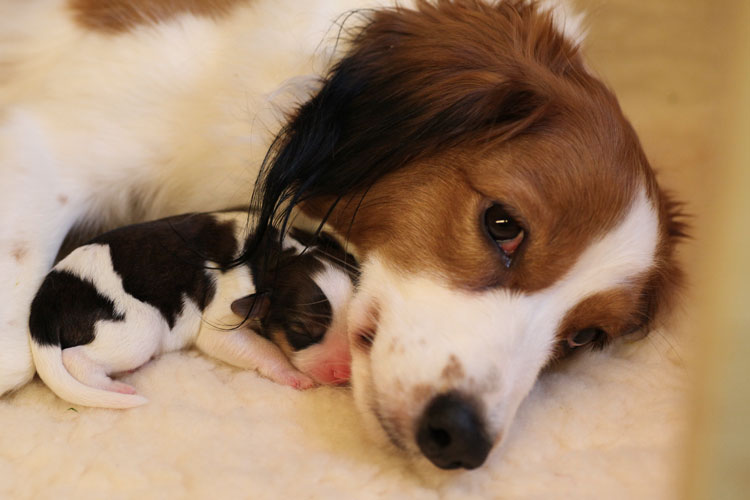 Erstes Kuscheln mit Mama am Tag nach der Geburt